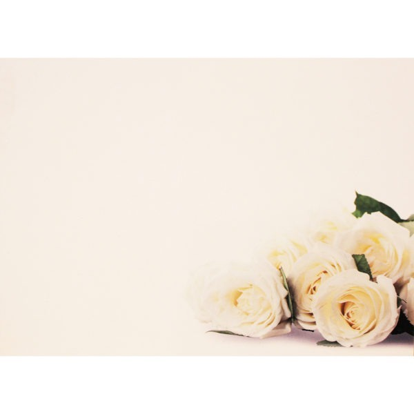 Large Plain Cards - Ivory Roses 1