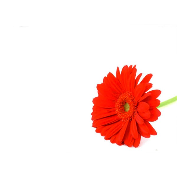 Large Plain Cards - Red Flower 1