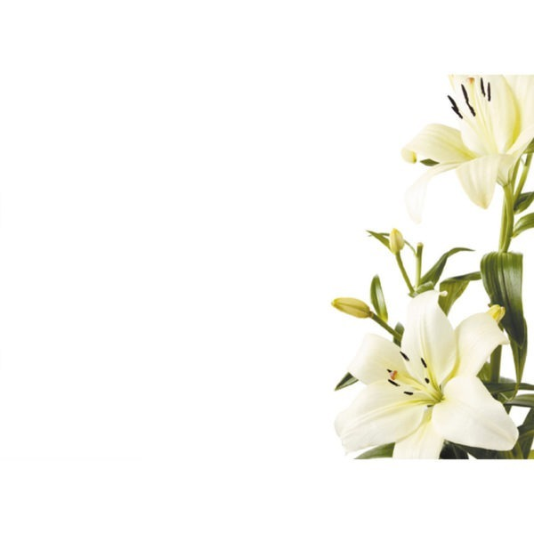 Large Plain Cards - White & Green Lilies 1