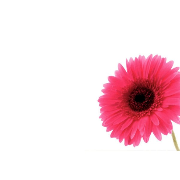 Small Plain Cards - Bright Pink Gerbera 1