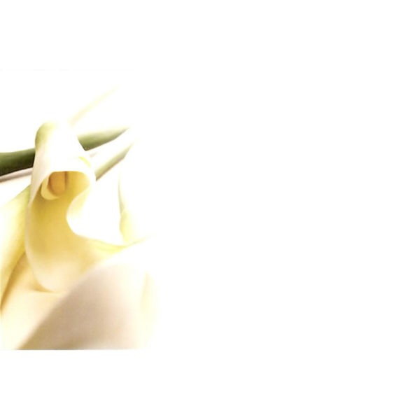 Small Plain Cards - Calla Lily 1