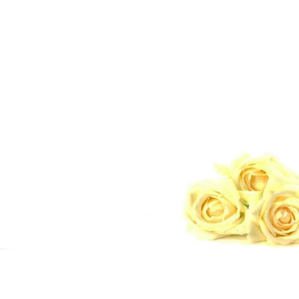 Small Plain Cards - Three Ivory Roses 1