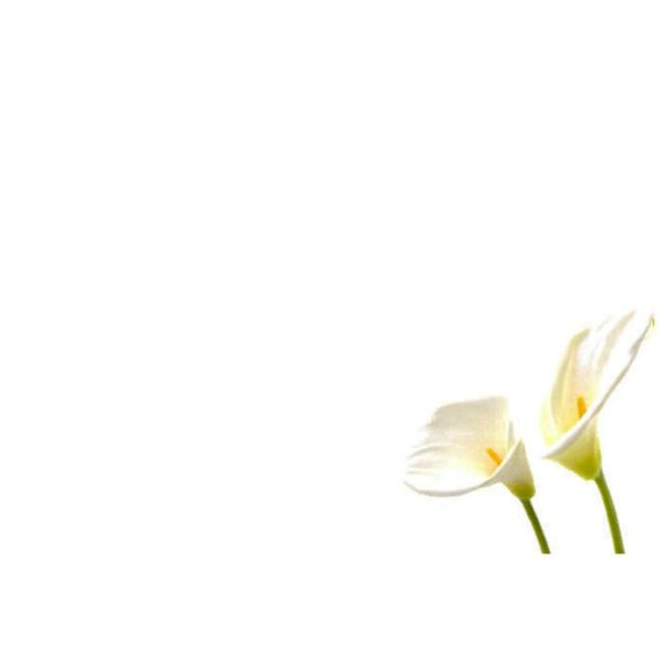 Small Plain Cards - White Lilies 1