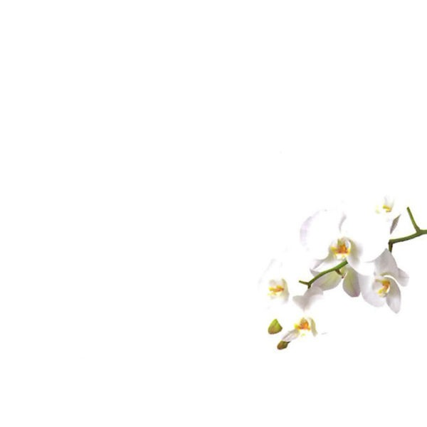Small Plain Cards - White Orchid 1