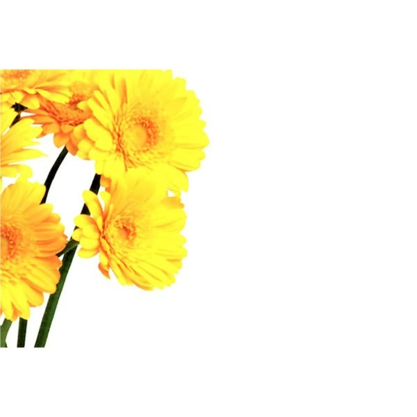 Small Plain Cards - Yellow Gerberas 1