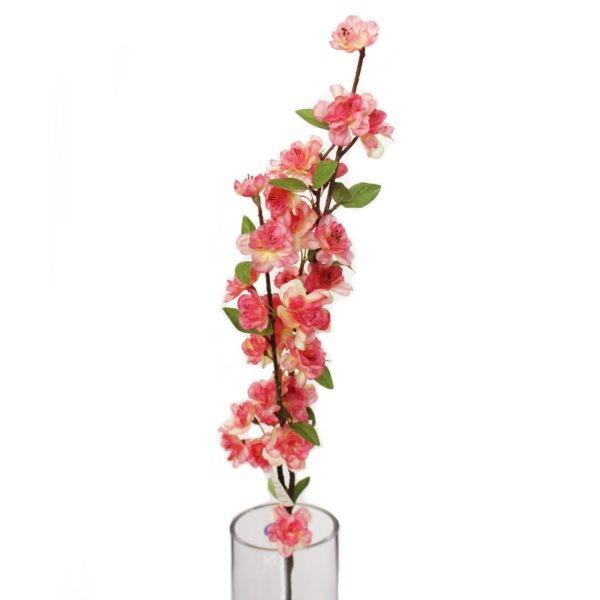 Pink Blossom 1