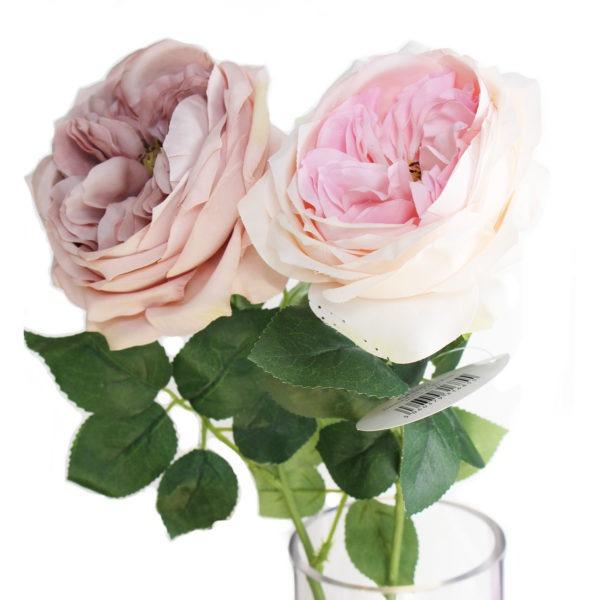 Garden Rose - Multiple Colours 1