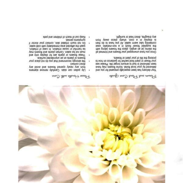 Folding Flower and Plant Care Card - White Dahlia 1