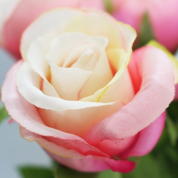 Peach Rose 1