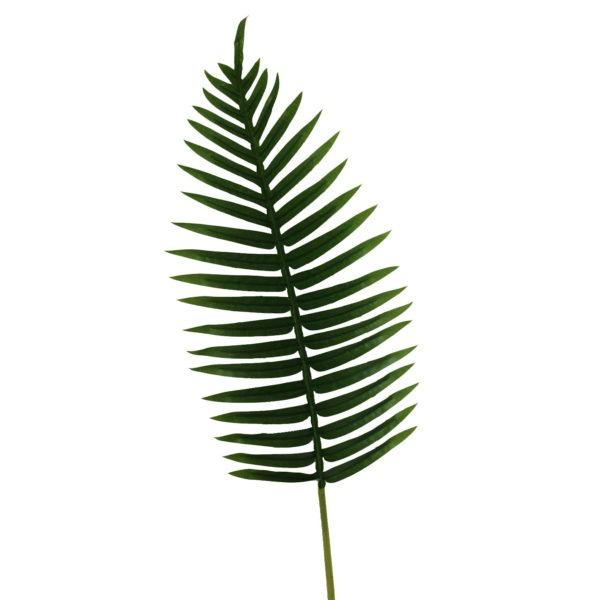 Fern Palm Leaf 1