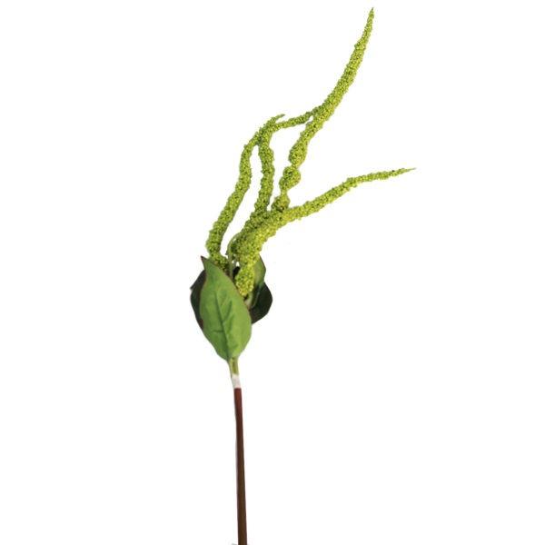 Green Amaranthus 1
