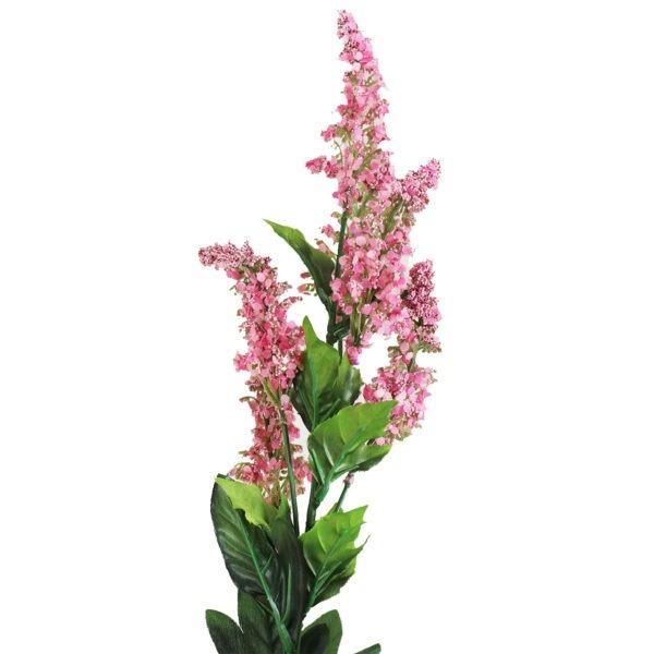 Pink Veronica Cottage Garden 1